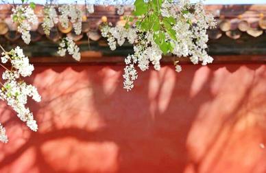 春和景明,携好友品佳酿不负春光 ——路易十三之家,在帝都等你